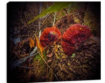 Red Fungi Print - Jessica Mason