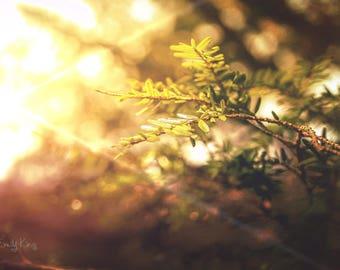 Tree Limb Close up