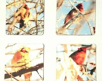 Set of 4 2x2 Mini Magnets- Cardinals