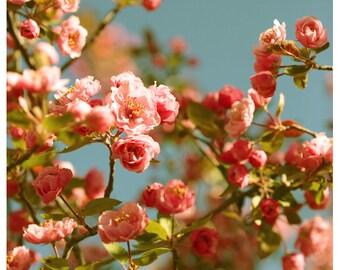 Flower Photograph - Nature Photography - Pink Art - Spring Things - Spring Art- Cherry Blossom Art Print - Fine Art Photograph - Floral Art