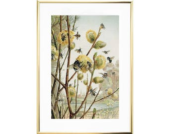 gorgeous bees print framed vintage wall art antique art prints insects print