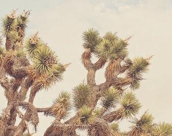 SALE Joshua Tree print, desert picture, boho wall art, southwestern decor, yucca tree photograph, Palm Springs, green, brown, botanical phot