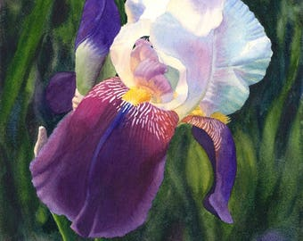 White Purple Iris Art Original Watercolor Painting by Cathy Hillegas,16.2x121.5, watercolor iris, watercolor floral painting, Gift for mom