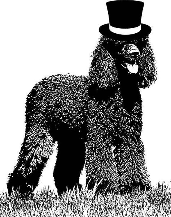 Irish water spaniel dog in top hat dog png clipart Digital graphics Image Download animals puppies dogs printable art