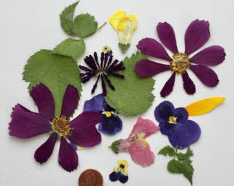 200 Pressed Flowers, Petals and Leaves, Dried Flowers, Craft Supply, Centerpiece, Real Flowers, Decoupage Supplies, Invitation embelishments