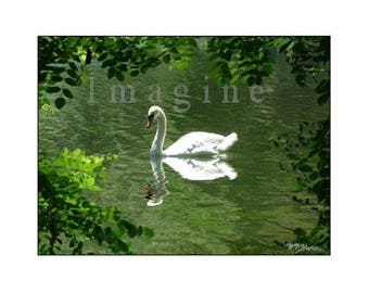 Swan Photo,Swan Photography,Swan,Bird Photograpohy,Wall Art,Art