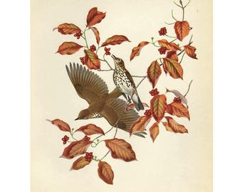 Vintage Wood Thrush Print Book Plate SALE Buy 3, get 1 FREE
