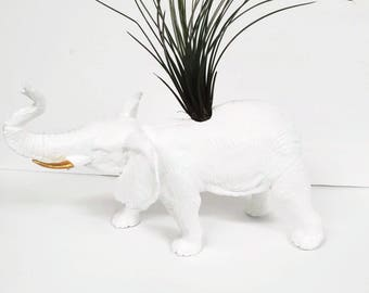 Huge white elephant planter with large air plant.