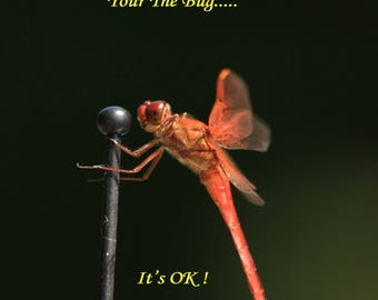 Sometimes Your the Bug  16x20 Inspirational