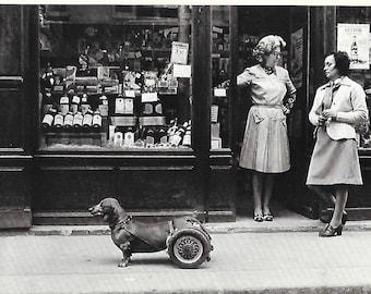 Handicap Dachshund Dog on Wheels by Robert Doisneau Captured in 1977- Black and White Postcard
