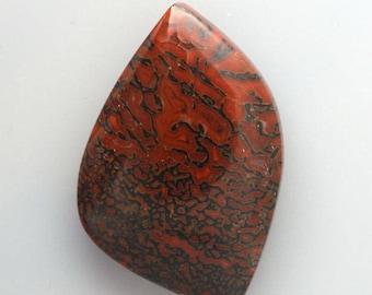 Hand Cut  Dinosaur Bone  Cabochon