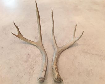 2 painted real deer antler sheds design decor crafts art centerpiece gift rustic antlers sheds display