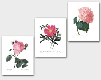 Set of Botanical Prints SALE (Pink Flower Wall Art, Pink Flower Art, Pink Room Decor, Pink Nursery) Redoute Print Set of 3