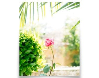 Pink Rose Art Print - Boyle Heights LA, Floral, Plants, Rose, Palm Tree