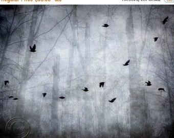 ON SALE Blackbird Print, Surreal Flying Blackbirds, Mysterious Flock of Blackbirds, Bird Flock, Dark Forest, Foggy Forest, Foggy Woods