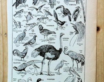 French  Dictionary Illustration, birds, 1922, craft, poster, old book,