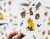 Wildlife Postcard set of 5