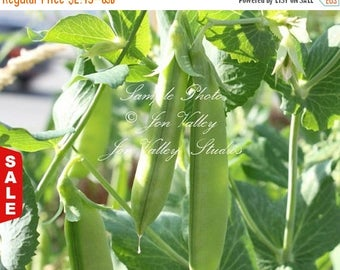 Sugar Snap Heirloom Pea Vegetable Gardening Seeds! Original Snap Pea Sweet and Tasty Cool Weather Crop Use Fresh or Frozen