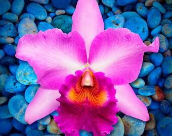 Cattleya Zen Orchid Metal Print