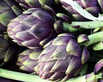 Artichoke di Romagna, perennial  20+ seeds, rare delicious purple artichokes