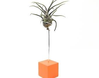 Tart Orange Block Air Plant Display, Orange Air Plant Holder, Air Plant Display, Air Plant Holder, Orange Planter, Small House Plant