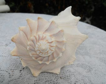 "Vintage Conch Shell Spiral Design 7"" Long"