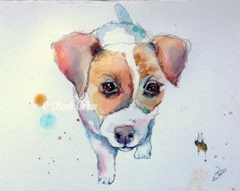 Jack Russell Pup !
