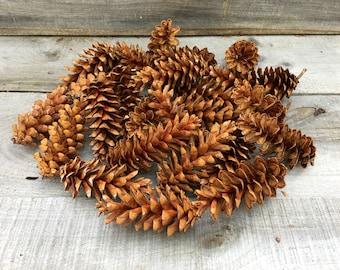 25 White pine cones