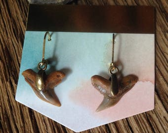 Fossilized sharks teeth earrings: Extinct tiger shark earrings, fossil jewelry, shark earrings, fossil earrings, tiger shark jewelry
