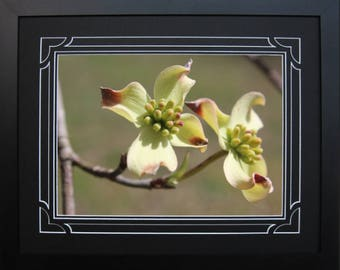 Framed and Double Matted Dogwood Photo