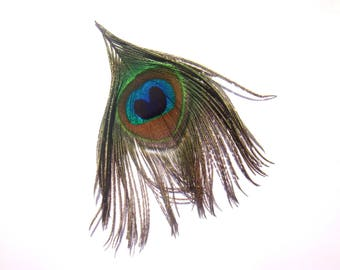 "1 ""Peacock eye"" Feather natural 13.5 cm long"