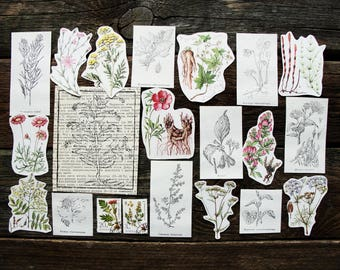 Medicinal Plants - Vintage Paper Ephemera Craft Pack, 21 Piece - Junk Journal Smash Book Scrapbooking Nature Journals Collage Supplies Set