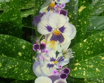 Pressed flower bookmark, flower bookmark, personalized bookmark, back to school, pressed flower, custom bookmark, pansies art, bookmarks art
