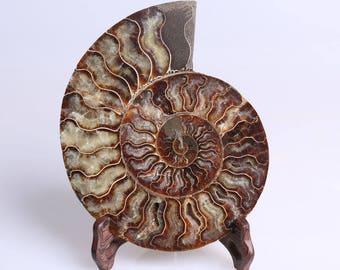 Split Ammonite Fossil Specimen Shell Healing Madagascar+Free Stand J514L
