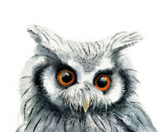 Red-Eyed Owl watercolor Painting - Giclee Print - Home Wall Decor - White-faced Owl Illustration bird print.