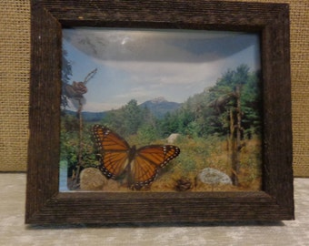Vintage Butterfly Terrarium Showcase, Monarch Butterfly