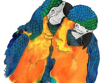 Parrot Illustration Print