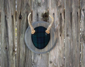 Rustic Plaid Antler Mount Taxidermy