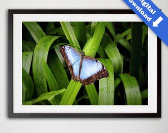 Blue Butterfly Photograph - Digital Download