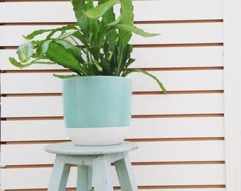 Golden Orchid Cactus Plant (1)