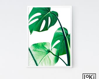 Monstera Leaf, Monstera Leaf Print, Monstera Deliciosa, Monstera Printable, Plant Print, Plant Print Art, Tropical Leaf Print, Plant Photo