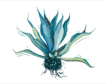 Blue Agave Plant/Digital