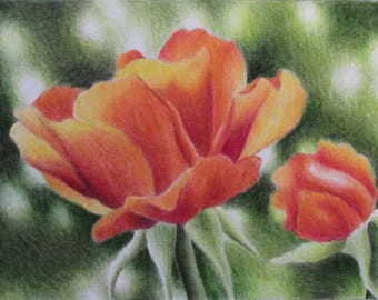 colored pencil drawing of a red rose (original)