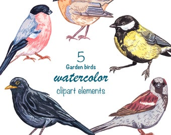 WATERCOLOR CLIPART, garden birds, watercolour clipart birds, png, instant download, digital download, commercial use, woodland clipart