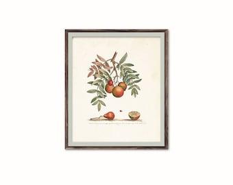 Antique Art Print, Digital Download, Fruit Wall Print, Fruit on Tree Illustration, Rustic Fruit Print, Shabby Chic Print, Cottage Home Decor