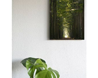 Forest on canvas