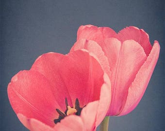 Flower Photography Wall Art Print, Tulip Art, Large Wall Art, Pink Flower Botanical Print, Floral Wall Art, Nature Photography Print