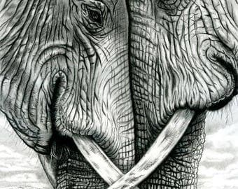 Two Elephants Blank Greeting Card 5 x 7 inches