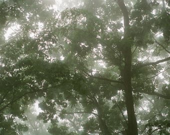 Trees in fog II | 35mm color film photography print