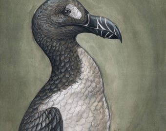 Great Auk (Pinguinus impennis)